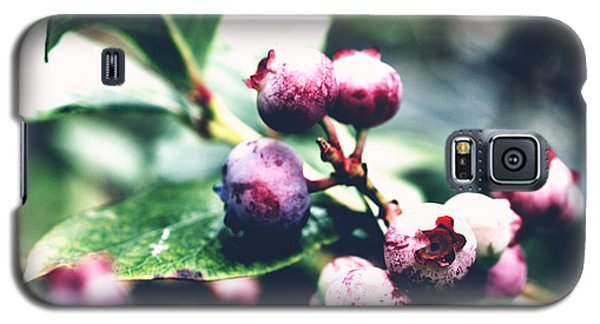 Galaxy S5 Case featuring the photograph Early Blueberries by Rachel Mirror
