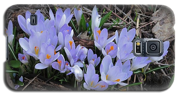 Early Crocuses Galaxy S5 Case
