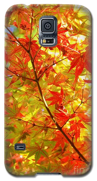 Early Fall Galaxy S5 Case