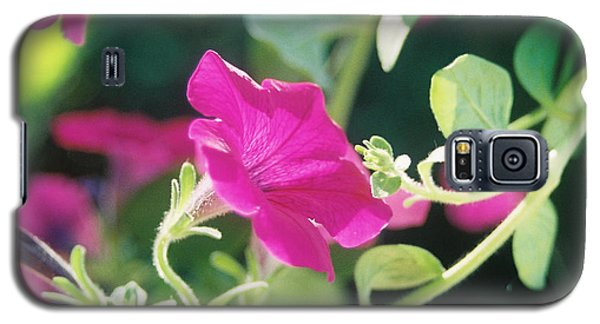 Galaxy S5 Case featuring the photograph Early Morning Petunias by Alan Lakin