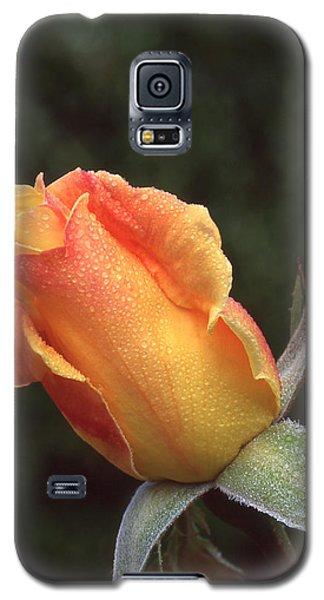 Early Morning Rosebud Galaxy S5 Case