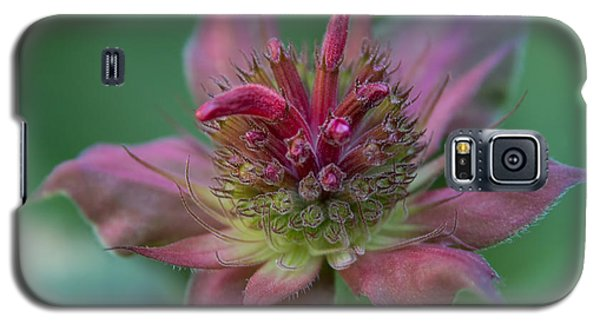 Early Spring Bee Balm Bud Galaxy S5 Case by Denyse Duhaime