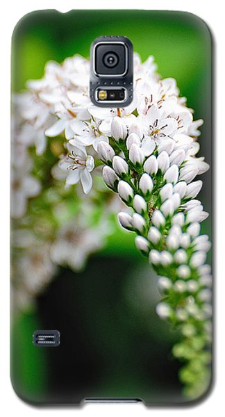Early Spring Galaxy S5 Case
