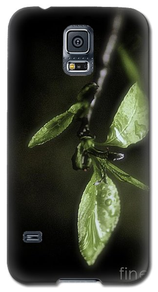 Early Spring Leaves Galaxy S5 Case
