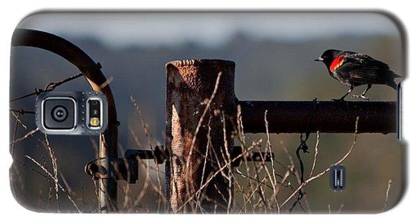 Eary Morning Blackbird Galaxy S5 Case