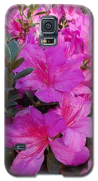 Easter Azaelas Galaxy S5 Case