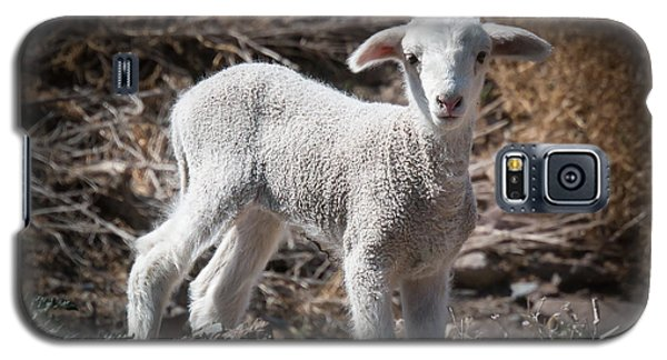 March Lamb Galaxy S5 Case
