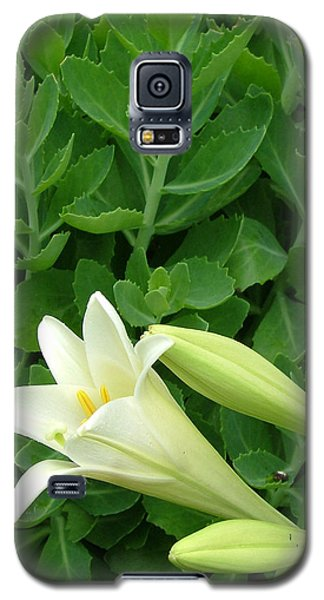 Easter Lily Galaxy S5 Case by Natasha Denger