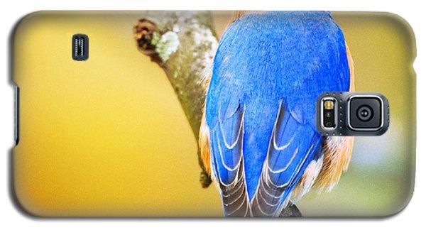Eastern Blue Bird Of Spring Galaxy S5 Case