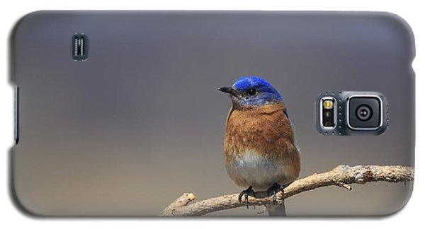 Eastern Bluebird 3 Galaxy S5 Case by Gary Hall