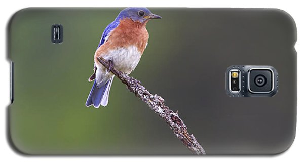 Galaxy S5 Case featuring the photograph Eastern Bluebird by Gary Hall