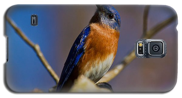 Eastern Bluebird Galaxy S5 Case by Robert L Jackson