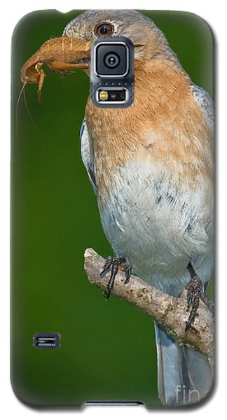 Galaxy S5 Case featuring the photograph Eastern Bluebird With Katydid by Jerry Fornarotto