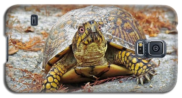 Galaxy S5 Case featuring the photograph Eastern Box Turtle by Cynthia Guinn