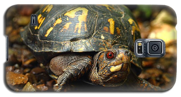 Eastern Box Turtle Galaxy S5 Case