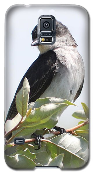 Galaxy S5 Case featuring the photograph Eastern Kingbird by Anita Oakley