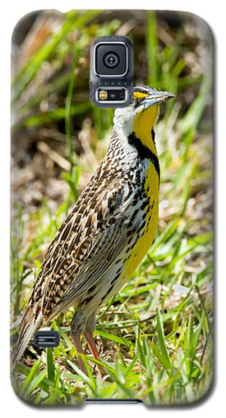 Eastern Meadowlark Galaxy S5 Case by Anthony Mercieca