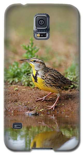 Meadowlark Galaxy S5 Case - Eastern Meadowlark (sturnella Magna by Larry Ditto