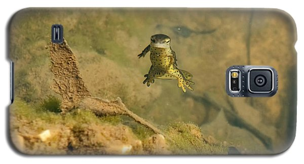 Eastern Newt In A Shallow Pool Of Water Galaxy S5 Case by Chris Flees