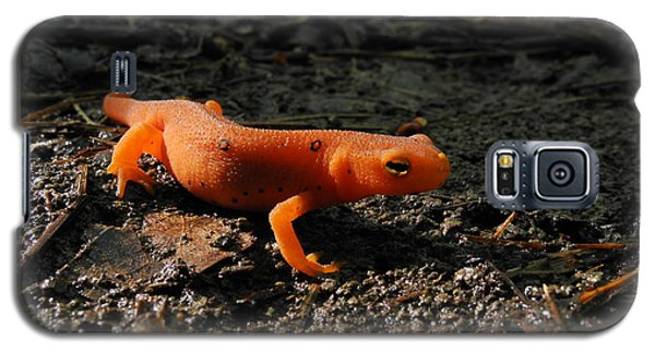 Eastern Newt Red Eft Galaxy S5 Case