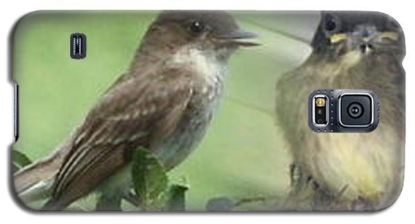 Eastern Phoebe Family Galaxy S5 Case