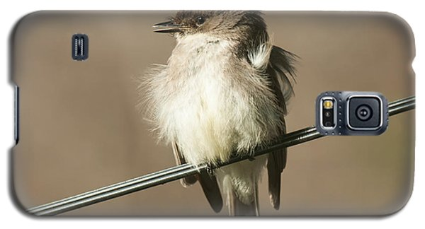 Eastern Phoebe Galaxy S5 Case
