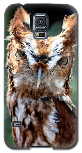 Eastern Screech-owl Galaxy S5 Case
