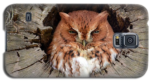 Eastern Screech Owl Galaxy S5 Case
