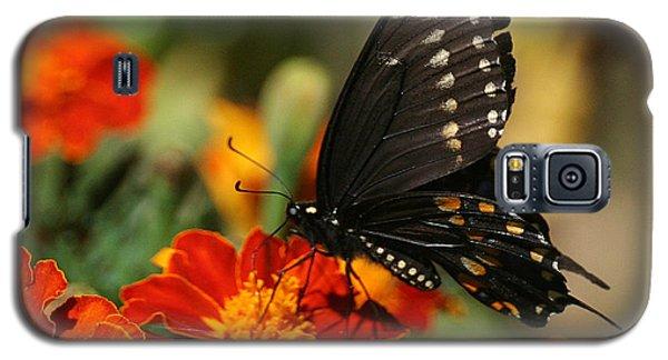 Eastern Swallowtail On Marigold Galaxy S5 Case