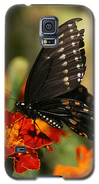 Eastern Swallowtail On Marigold Galaxy S5 Case