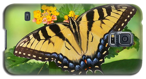 Galaxy S5 Case featuring the photograph Eastern Tiger Swallowtail Butterfly by Myrna Bradshaw