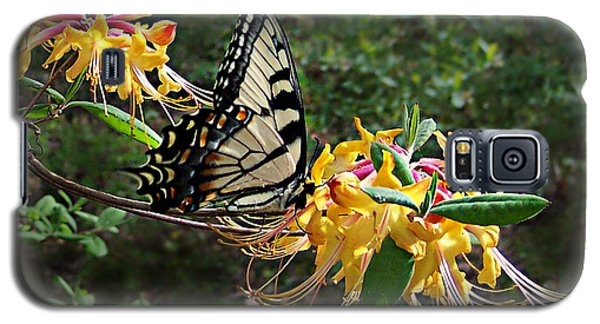 Eastern Tiger Swallowtail Butterfly Galaxy S5 Case
