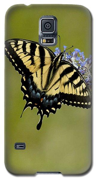 Eastern Tiger Swallowtail On Butterfly Bush Galaxy S5 Case