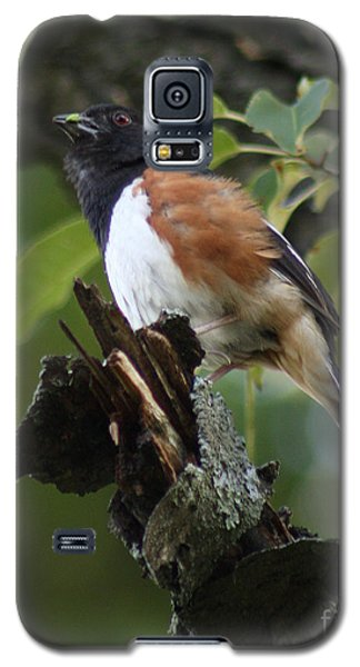 Galaxy S5 Case featuring the photograph Eastern Towhee by Anita Oakley