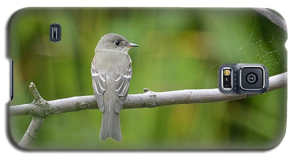 Eastern Wood Pewee Galaxy S5 Case