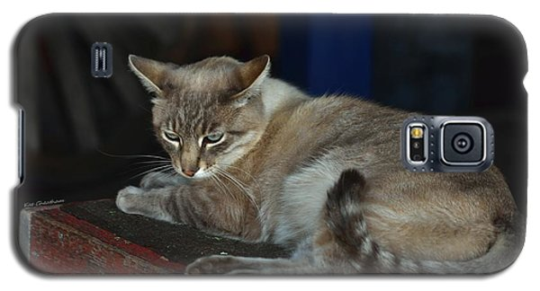 Easy Going Barn Cat Galaxy S5 Case by Kae Cheatham