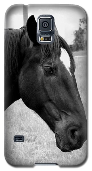 Galaxy S5 Case featuring the photograph Ebony Beauty by Laurie Perry