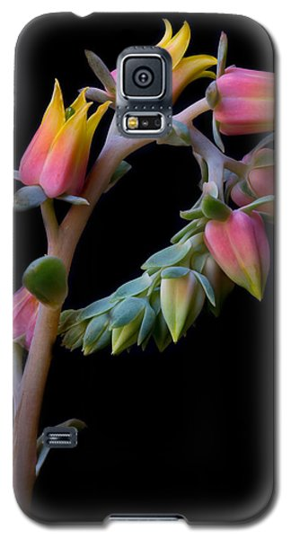 Echeveria Galaxy S5 Case