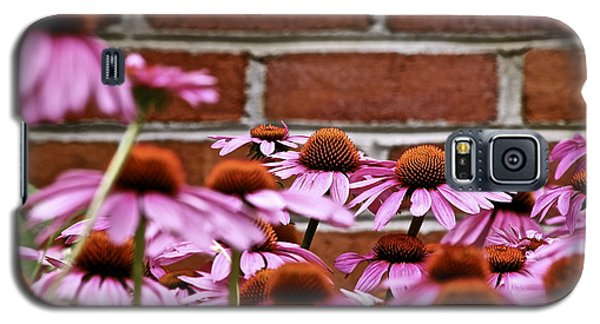 Echinacea And Brick Wall Galaxy S5 Case