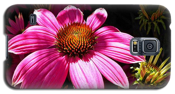 Galaxy S5 Case featuring the photograph Echinacea Blooms by Suzy Piatt