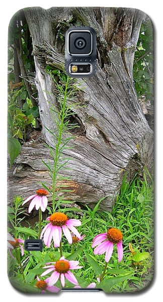 Galaxy S5 Case featuring the photograph Echinacea Stumpage by Randy Rosenberger