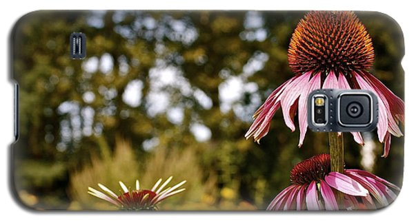 Galaxy S5 Case featuring the photograph Echinacea With Bee by Linda Bianic