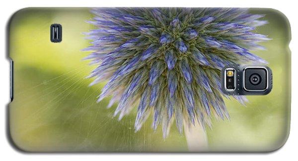 Echinops Blue Galaxy S5 Case