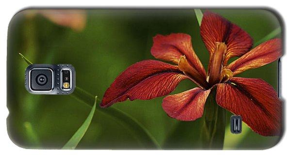 Galaxy S5 Case featuring the photograph Echo - Copper Iris Art Print by Jane Eleanor Nicholas