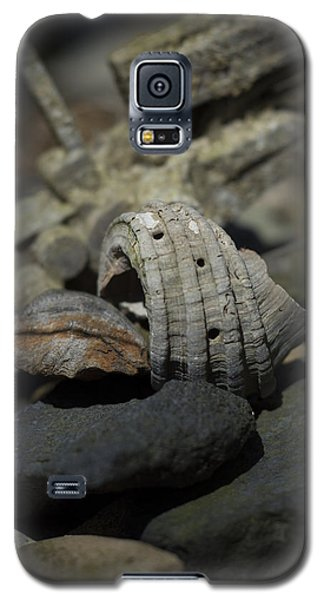 Galaxy S5 Case featuring the photograph Ecphora Gardnerae by Rebecca Sherman