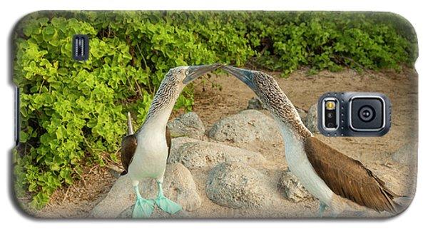 Boobies Galaxy S5 Case - Ecuador, Galapagos National Park, San by Jaynes Gallery