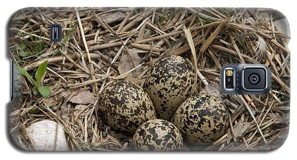 Killdeer Galaxy S5 Case - Eggs In Killdeer Nest by Linda Freshwaters Arndt
