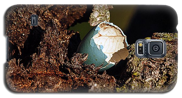 Galaxy S5 Case featuring the photograph Eggs Of Nature 1 by David Lester