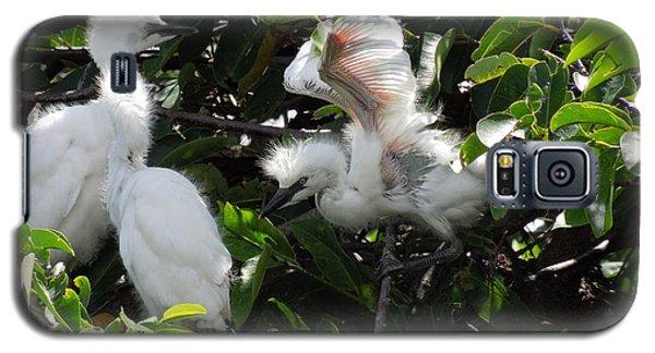 Egret Chicks Galaxy S5 Case by Ron Davidson
