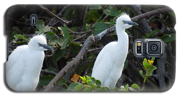 Egret Chicks Waiting To Be Fed Galaxy S5 Case by Ron Davidson